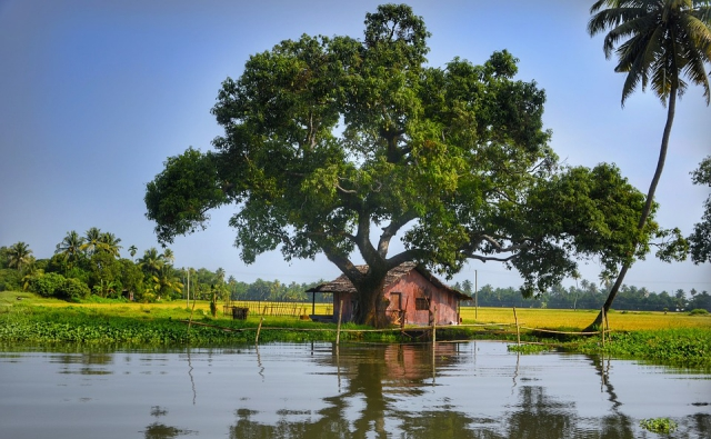 ケララ州の湖と木。